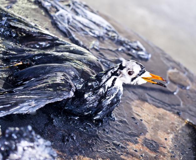 Alternative ecosostenibili - Siamo tutte come il cormorano